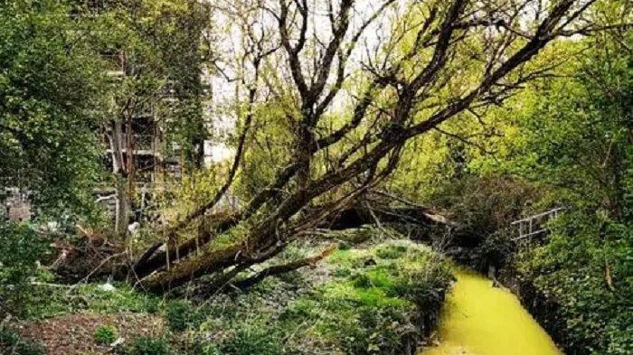 Air Sungai Berubah Warna Kuning Cerah, Warga Skotlandia Mengaku Takut dan Ngeri