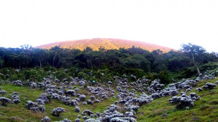 Gunung Dekat Jakarta - Destinasi Camping Manja Ini Cuma Hitungan Jam dari Ibu Kota Lho
