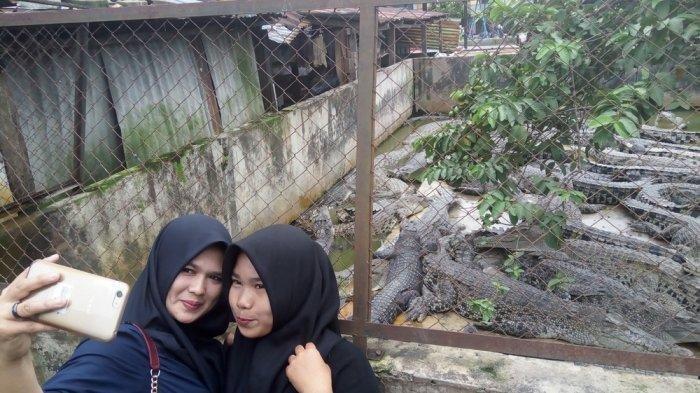 Taman Buaya Asam Kumbang, Destinasi Wisata untuk Selfie dengan Buaya di Medan