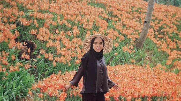Taman bunga amarilis di di Ngasem Ayu, Salam, Patuk, Gunungkidul, Yogyakarta.