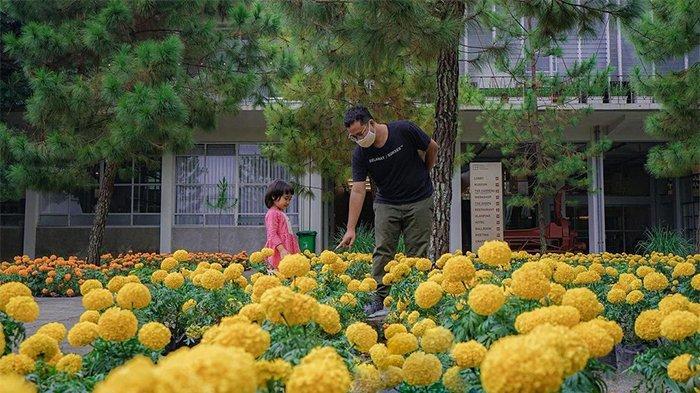 Taman bunga marigold di Rumah Atsiri
