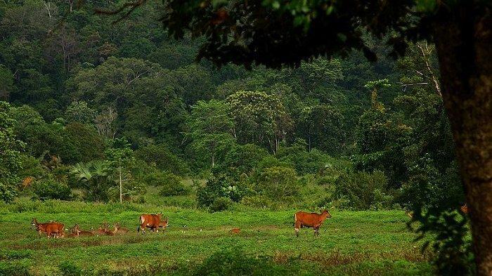 Inilah Spot Keren di Taman Nasional Alas Purwo yang Bikin Wisatawan Betah Berwisata