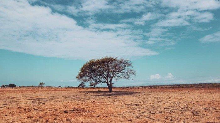 Menelusuri Keindahan Taman Nasional Baluran yang Dijuluki Little Africa van Java