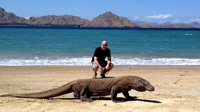 Proyek 'Jurassic Park' di TN Komodo, Benarkah Pulau Rinca ...