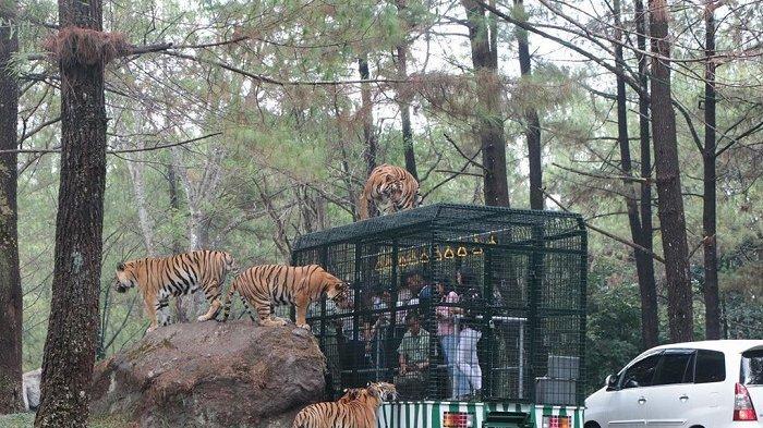 Taman Safari Prigen dan 4 Tempat Wisata di Pasuruan untuk Libur Akhir Pekan