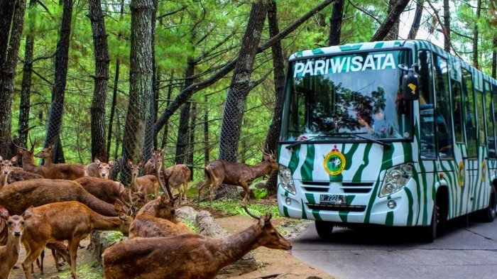 Terbaru! Harga Tiket Masuk Taman Safari Prigen 2021, Ada Safari Adventure hingga Animal Show