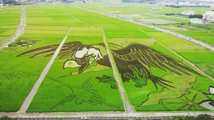 Mengenal Tanbo Art, Seni Melukis Menggunakan Sawah yang Unik dari Jepang