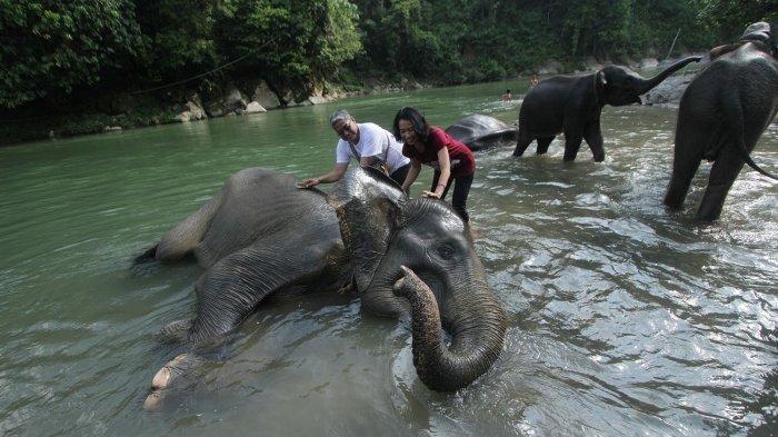 Jelajahi Hutan dan Lihat Gajah di Ekowisata Tangkahan di Taman Nasional Gunung Leuser