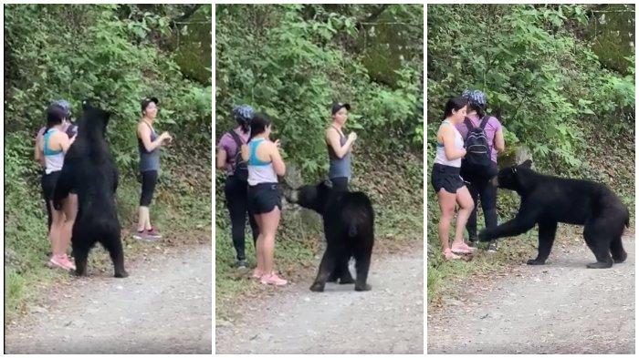 Didekati Beruang Liar, Pengunjung Taman Nasional ini Malah Selfie