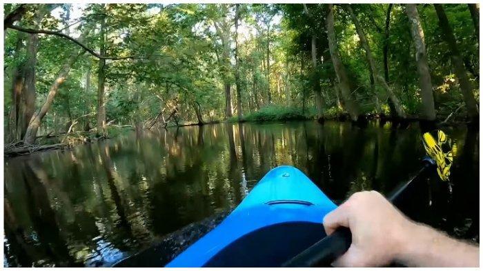 Viral di Medsos, Video Pria Disundul Aligator saat Asyik Berkayak di Sungai
