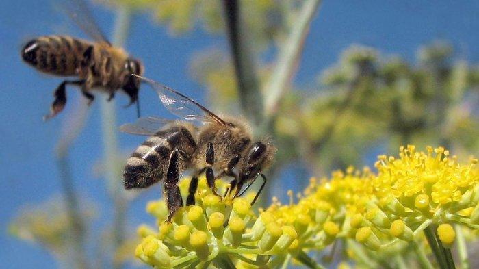 Serangan Lebah Sebabkan Masalah Serius di Pesawat, Sejumlah Pilot Diimbau Waspada