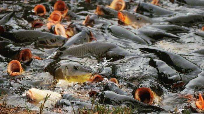 Mitos Ikan Keramat di Telaga Ranjeng, Tempat Wisata di Kaki Gunung Slamet dengan Pemandangan Menawan