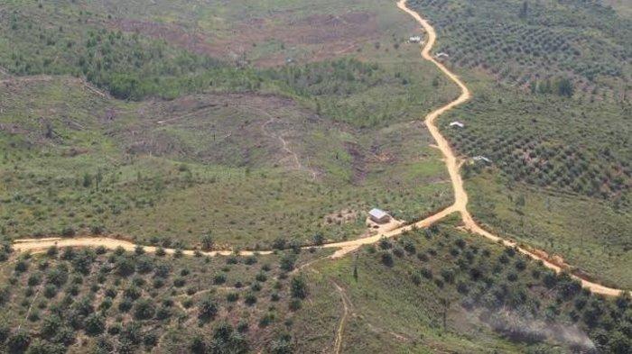 Lahan Taman Nasional Tesso Nilo Riau Terbakar, Jumlah Titik Panas Meningkat