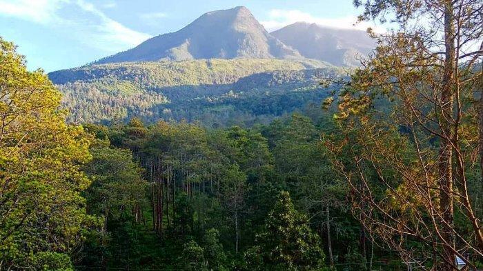 Pemandangan berlatar belakang gunung dan hutan pinus