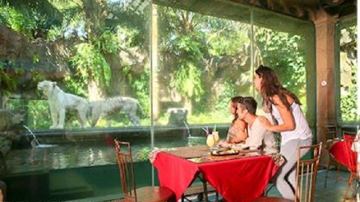 6 Fakta Menarik di Taman Safari Prigen, Bisa Makan Sambil Ditemani Harimau Putih