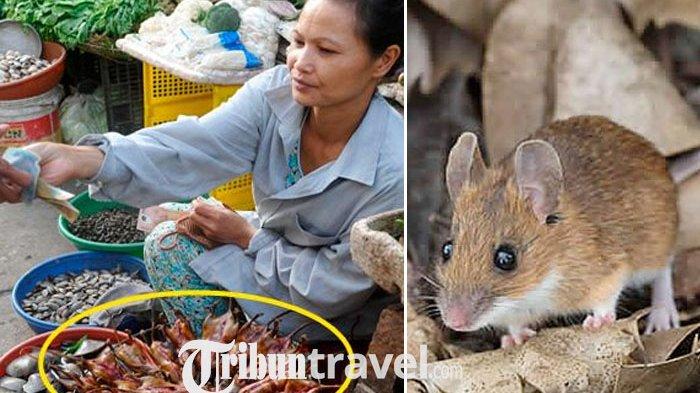 Tak Perlu Operasi Plastik, Wanita di Vietnam Makan Tikus agar Awet Muda