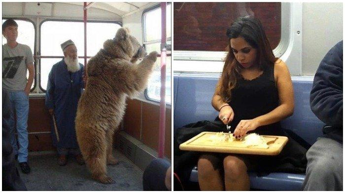 Kumpulan Foto Tingkah Aneh Para Penumpang di Kendaraan Umum, Beruang pun Ikut 'Numpang'
