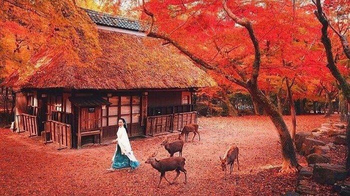 Kaleidoskop 2019 - Destinasi Internasional yang Paling Dicari Orang Indonesia, Tokyo hingga Paris