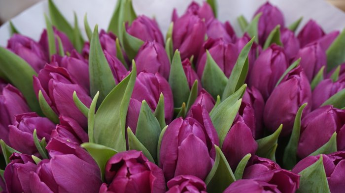 7 Tanaman Bunga Ini Bisa Tumbuh Hanya Dengan Segelas Air Ada Bunga Tulip Hingga Bambu Halaman All Tribun Travel