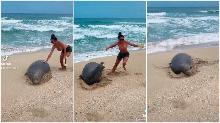 Turis wanita menyentuh anjing laut biarawan Hawaii yang terancam punah