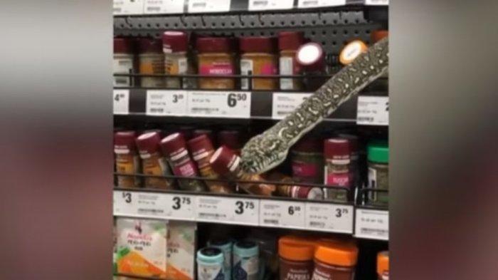 Ular Piton Besar Kejutkan Pengunjung Supermarket, Tiba-tiba Muncul dari Balik Rak Bumbu