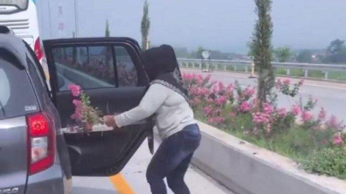 Video Traveler Wanita Cabut Bunga di Jalan Tol Viral di Medsos, Jasa Marga Angkat Bicara