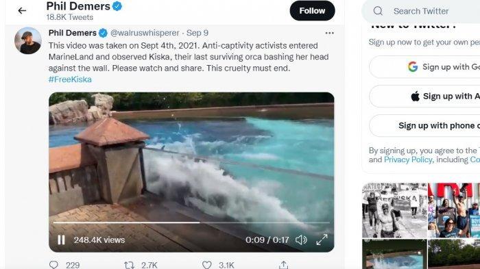 Viral Video Paus Pembunuh Membenturkan Kepala di Dinding, Alasannya Menyedihkan