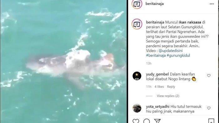 Viral Video Penampakan Hiu Paus di PantaiNgrenehan Gunungkidul Kagetkan Pemancing