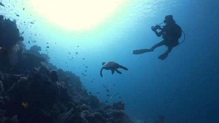 Pemandangan bawah laut Wakatobi