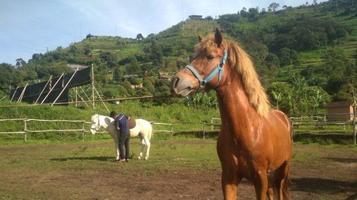 Cobain Serunya Wisata Berkuda dan Memanah di Stable Lembang Bandung