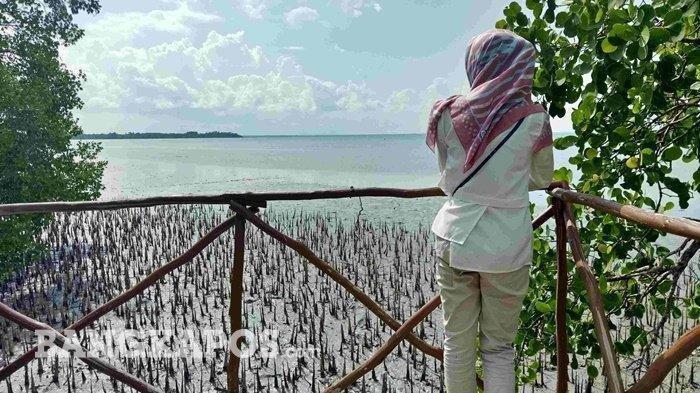 4 Tempat Wisata Hutan Mangrove Di Pulau Bangka Cocok Dikunjungi Untuk Liburan Akhir Pekan Tribun Travel