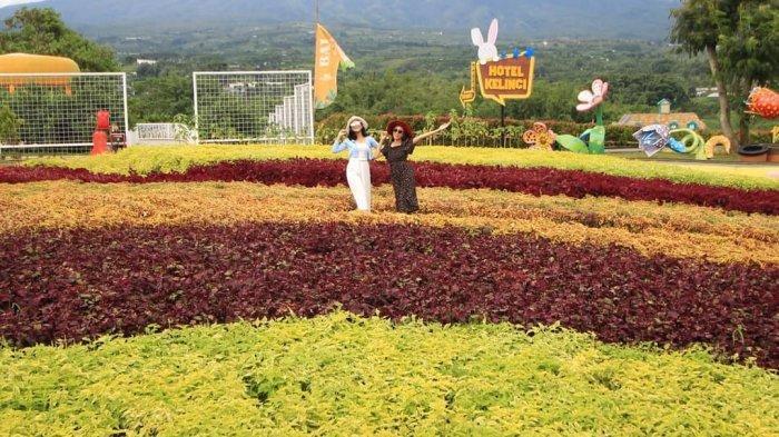 Harga Tiket Masuk Batu Love Garden Malang 2021, Ada Zona Fresh Flower hingga Walang Green House