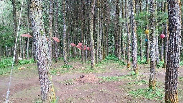 4 Tempat Wisata Dekat Rowo Bayu Banyuwangi, Telaga yang Dikaitkan dengan Kisah KKN Desa Penari