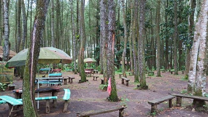 Tak Hanya Berfoto, Wisata Pinus Songgon Tawarkan Berbagai Aktivitas Wisata Seru
