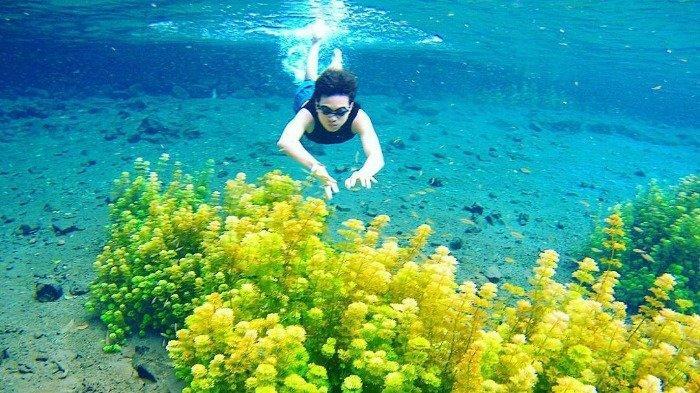 Wisata Sumber Sirah, Tempat Renang Asyik Sambil Lihat Ganggang Hijau dan Ikan Kecil