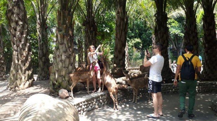TRAVEL UPDATE: Asyiknya Bermain di Bali Zoo Gianyar, Wisata Ramah Keluarga untuk Liburan Akhir Pekan