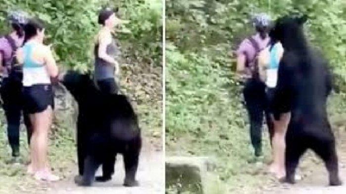 Viral di Medsos, Seorang Wisatawan Selfie dengan Beruang di Taman Nasional