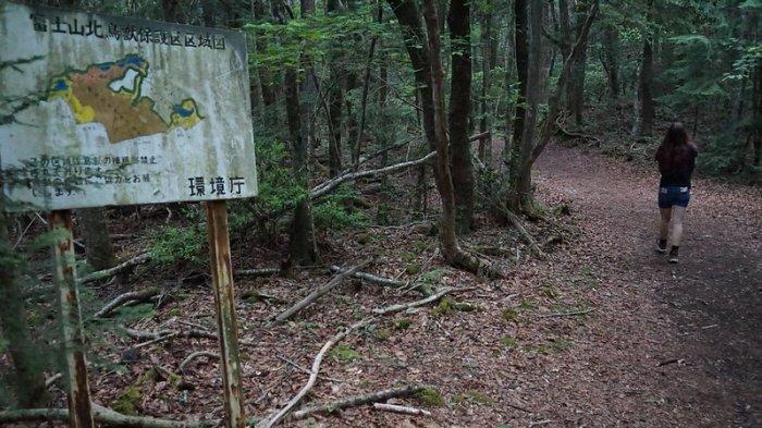 Jelajah Hutan Lebat Nan Indah di Kaki Gunung Fuji, Terkenal dengan Reputasinya yang Tragis