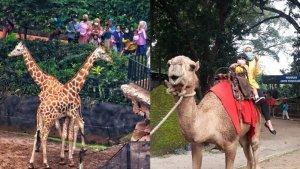 Bandung Zoological Garden Ditutup Sementara, Pengelola Minta Maaf