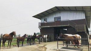The Ranch Cisarua dan 4 Tempat Wisata di Bogor yang Seru Buat Berkuda