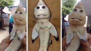 TRAVEL UPDATE: Viral di Medsos, Nelayan Ini Temukan Hiu Berwajah Manusia di NTT