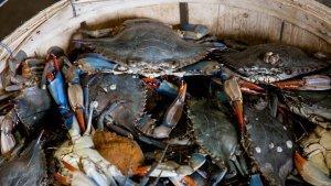 6 Cara yang Benar Bersihkan Kepiting, Termasuk Menggunakan Sikat