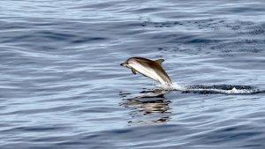 Miris! Lumba-lumba Ditemukan Mati dengan Celana Dalam Wanita Melilit Siripnya