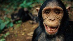 Jalin Hubungan Terlalu Dekat dengan Simpanse, Wanita Ini Dilarang Kunjungi Primata di Kebun Binatang