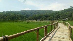5 Tempat Wisata di Bantul dengan Pemandangan Alam Memukau Buat Lepas Penat saat Liburan Akhir Pekan
