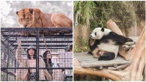 Sejumlah Tempat Wisata di Bogor Masih Ditutup, Taman Safari Sudah Mulai Beroperasi