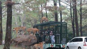 Wisata Taman Safari Prigen Sudah Dibuka, Tiket Masuk Bisa Dibeli Secara Online