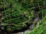 alas-harum-agrotourism-di-tegallalang-bali.jpg