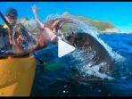 anjing-laut-menampar-seorang-pria-dengan-badan-gurita_20180930_113602.jpg