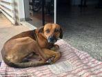 anjing-malang-di-san-paulo_20180311_211841.jpg